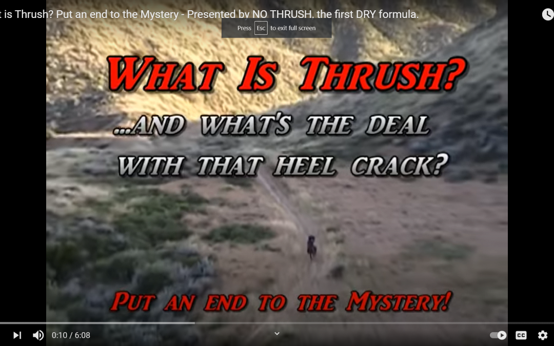 What Is Thrush? Why is it a Big Deal? How to control it….