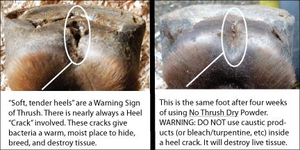 Pictures tell 1000 words. Get rid of the actual thrush problem – THE HEEL CRACK!