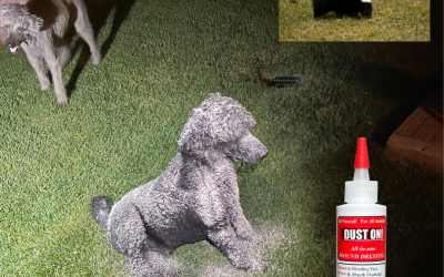 NEW DISCOVERY – Use DUST ON Powder for skunk smell